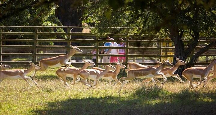 Howletts Animal Park.jpg