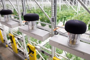 High-Yield-Cannabis-Grow-Facility-Integrate-lighting-and-other-systems-300x200.jpg