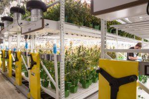 Cannabis-grow-facility-design-300x200.jpg