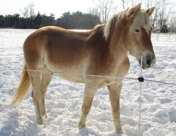 Rockie was one of our first horses on the farm!