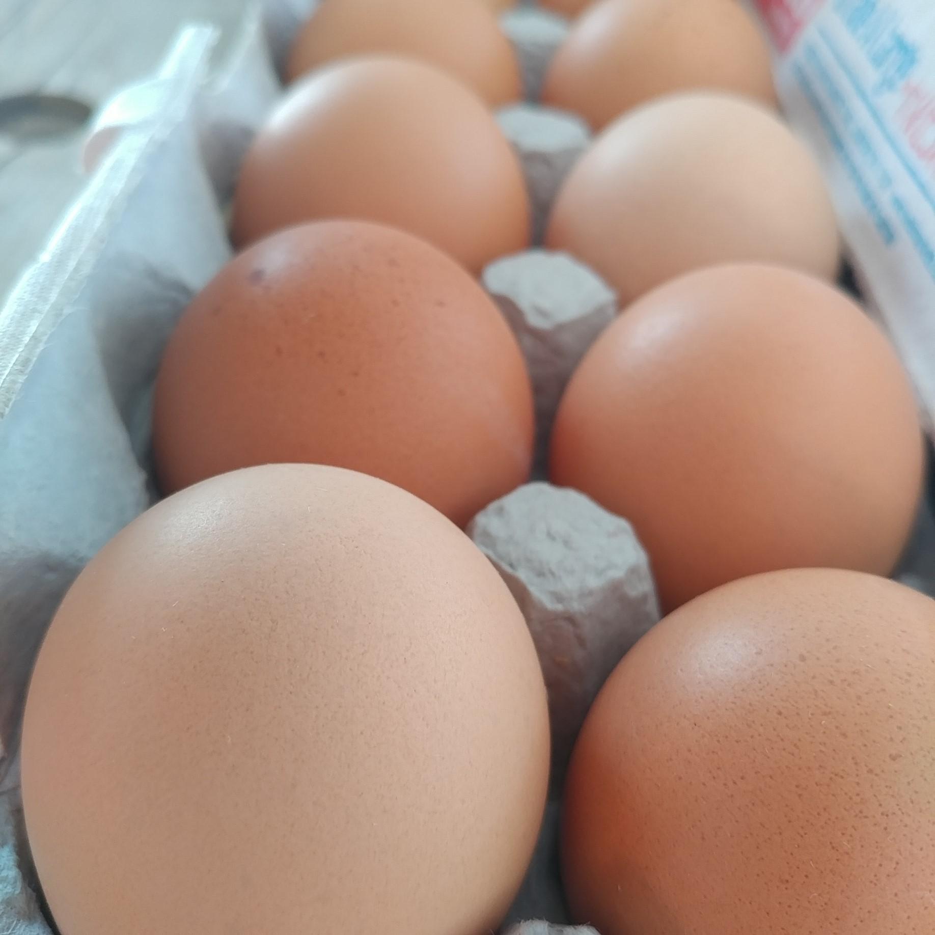 Tom Paduano - eggs close up.jpg