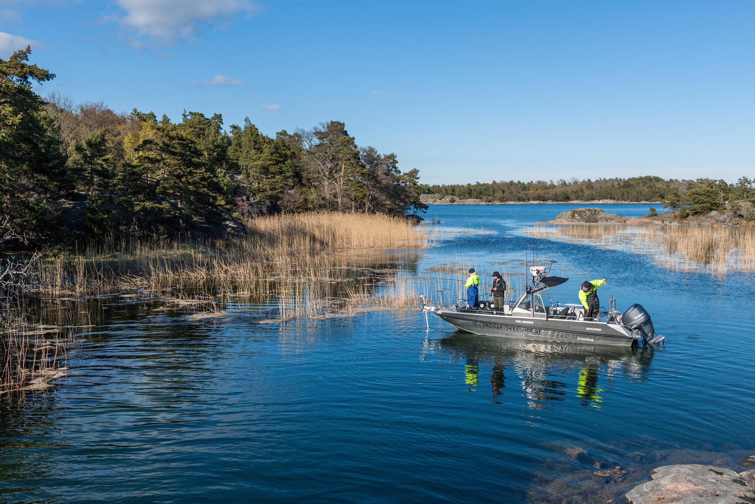 trosafiskeguide_stockholm_archipelago_bustermagnum.jpg