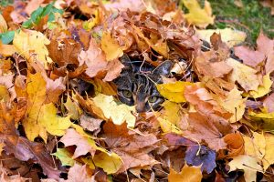 cat in pile of leaves; Stop hiding from your crap