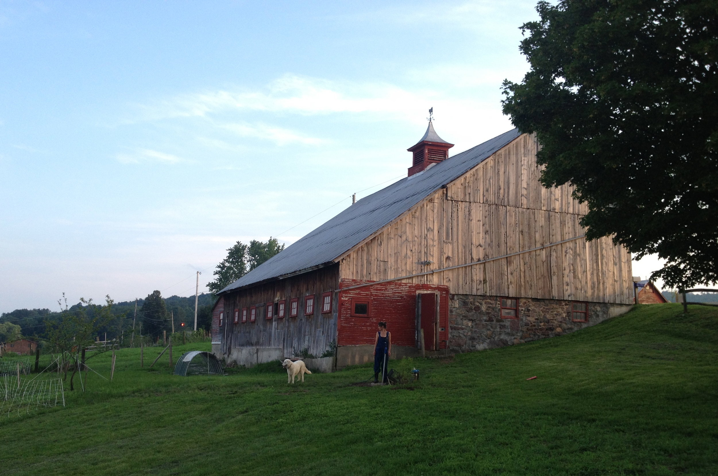 Vera Simon-Nobes (one of our first farmers!) and her sheep dog Aldo standing in front of the Sheep Barn prior to restoration in 2012.