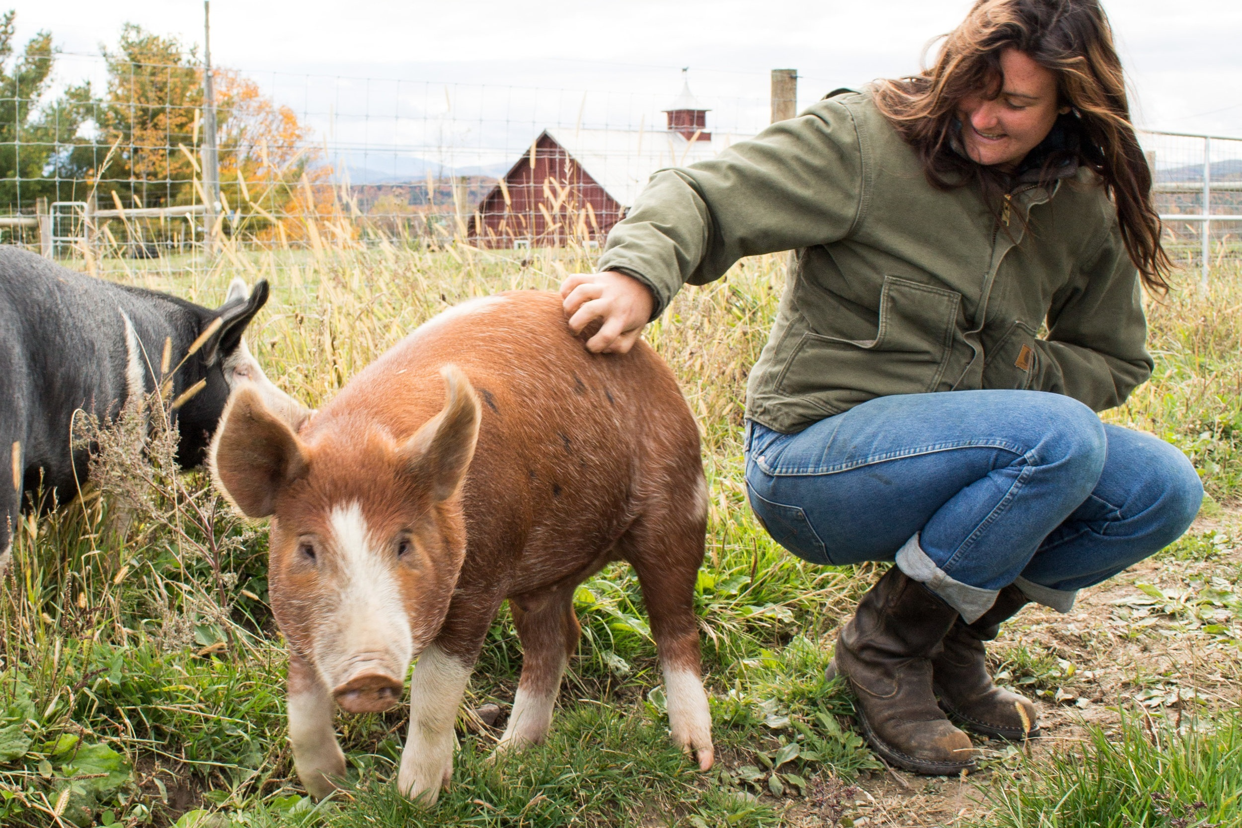 One of our early farmers, Lauren Lees, with our very first herd of pigs.