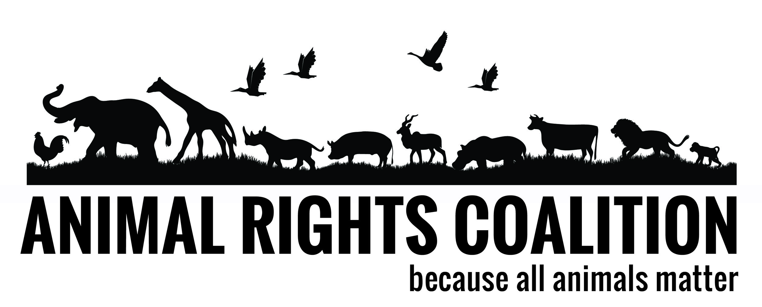 The Animal Rights Coalition works to end the suffering, abuse, and exploitation of non-human animals through information, education, and advocacy.