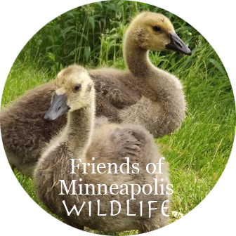 We seek to live in harmony with wildlife in Minneapolis, and to help protect animals and conserve their habitat throughout the City.