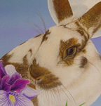 Save A Bunny Illustrations (2004) -