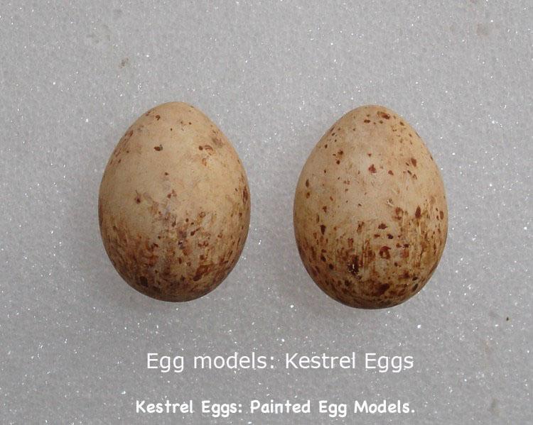 BirdEggs6_text.jpg