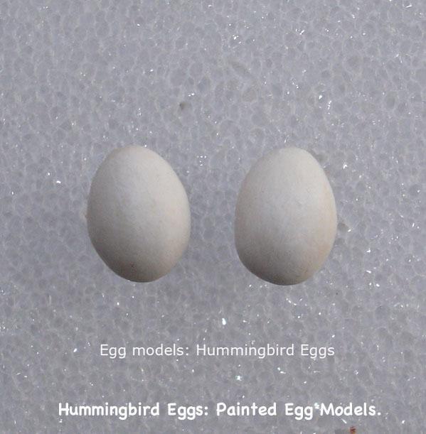 BirdEggs18_text.jpg