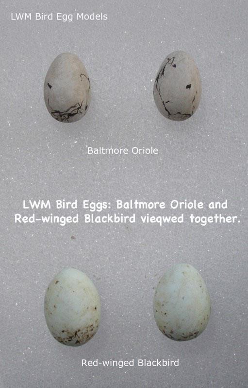 BirdEggs22_text.jpg