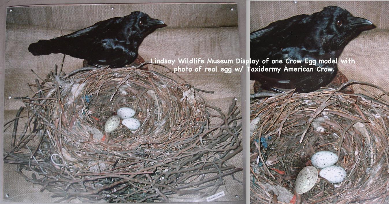 BirdEggs23_text.jpg