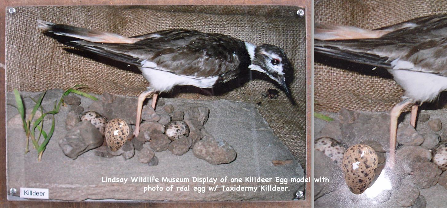 BirdEggs25_text.jpg