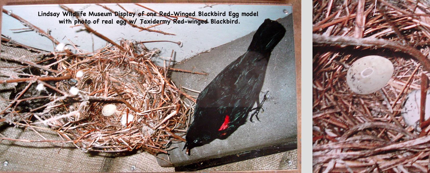 BirdEggs26_text.jpg
