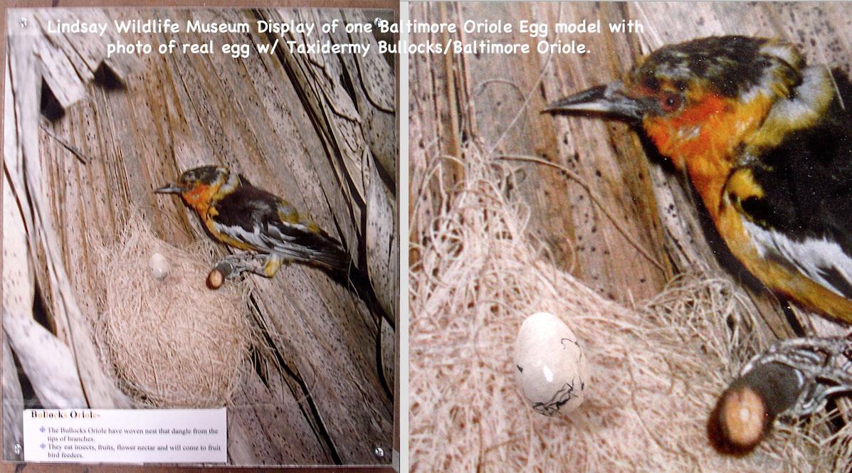 BirdEggs27_text.jpg