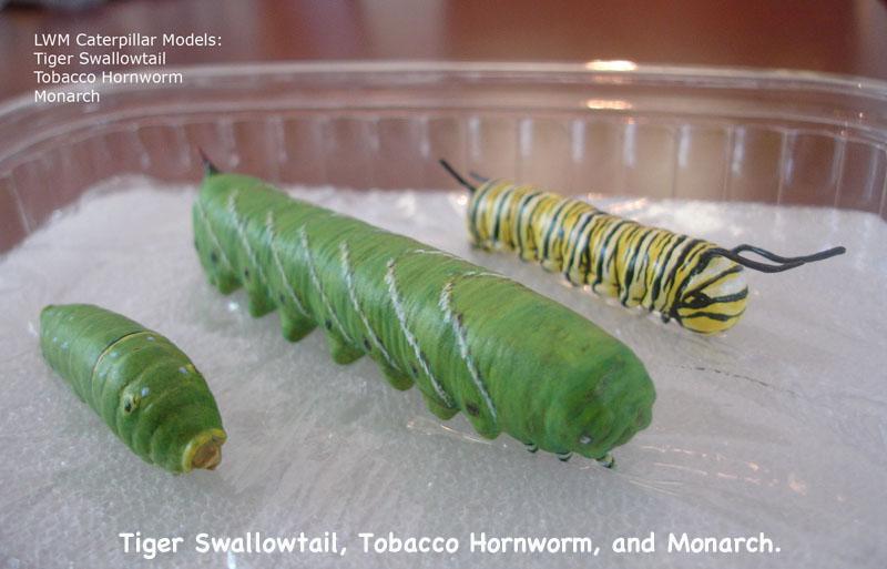 Caterpillars2_text.jpg
