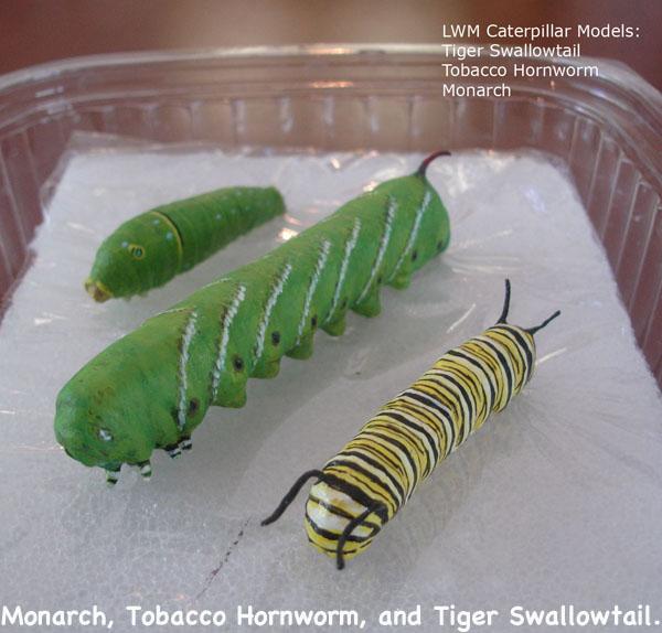 Caterpillars3_text.jpg