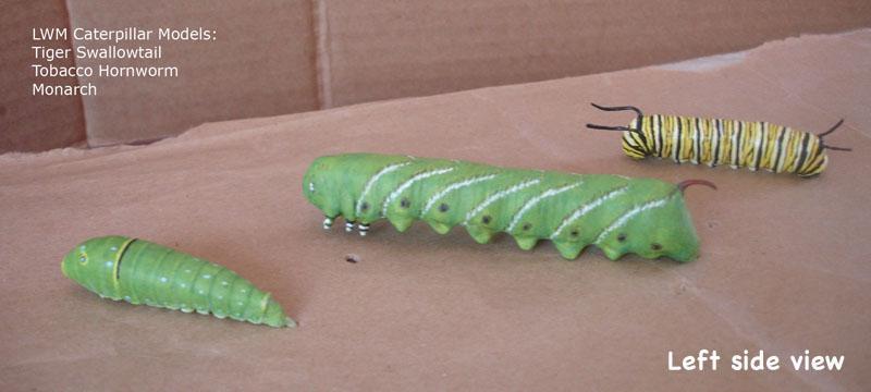 Caterpillars5_text.jpg