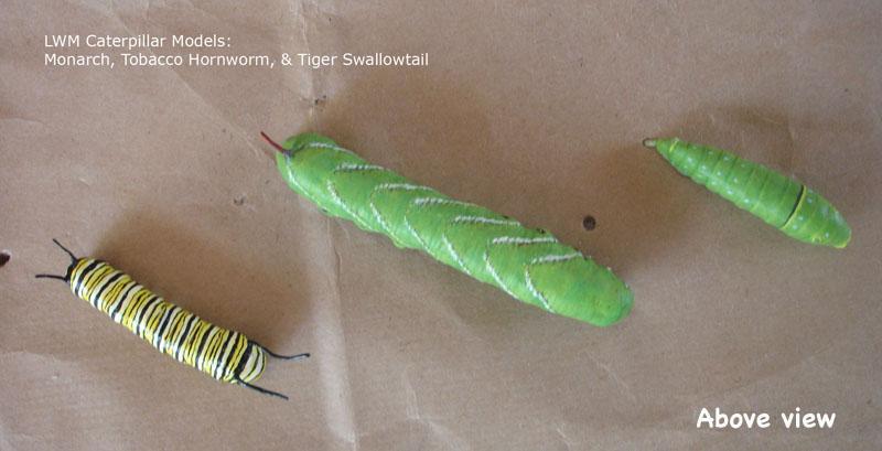Caterpillars6_text.jpg