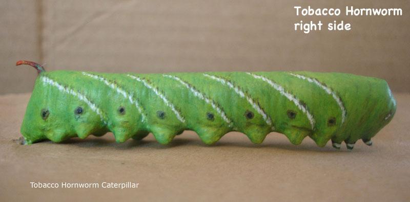 Caterpillars10_text.jpg