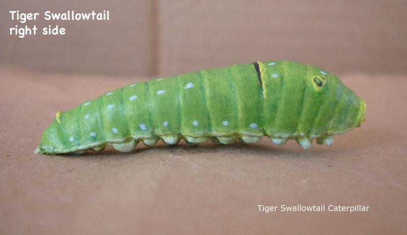 Caterpillars16_text.jpg