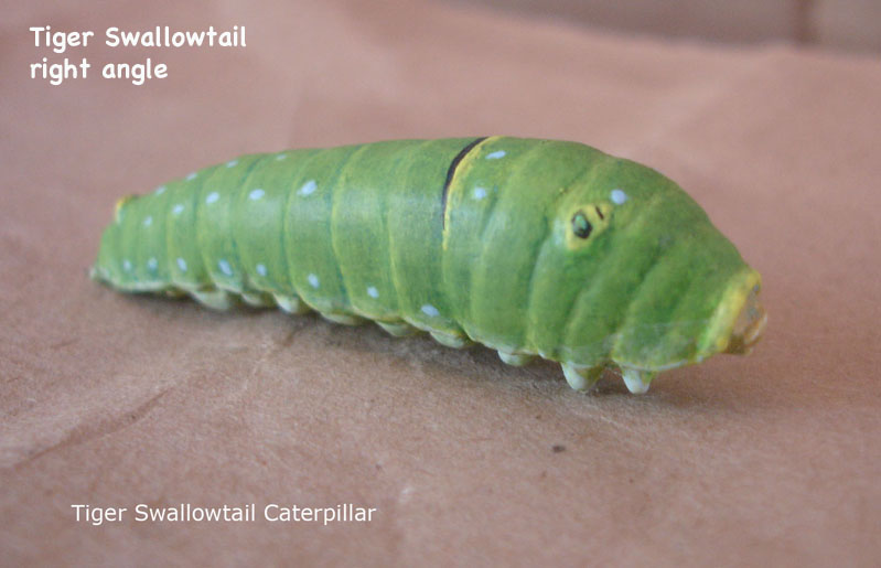Caterpillars17_text.jpg