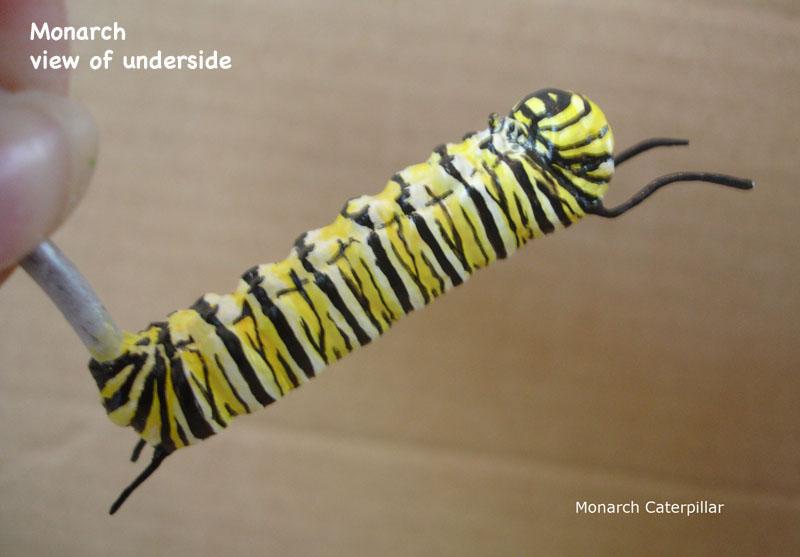 Caterpillars27_text.jpg