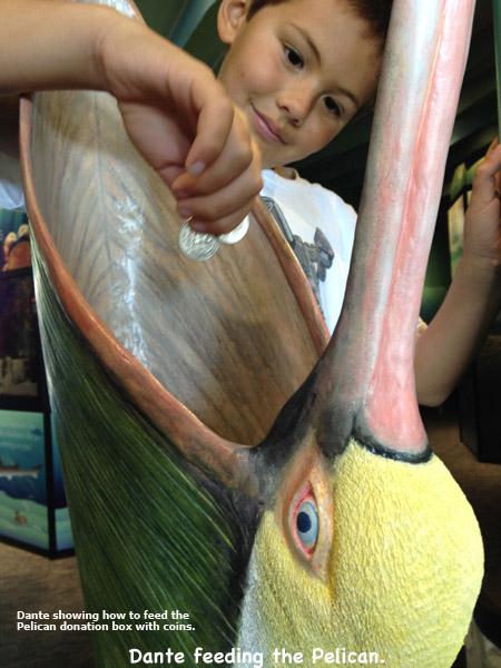 Pelican_Exhibit6Lg_text.jpg