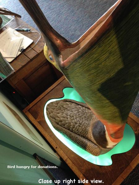 Pelican_Exhibit8Lg_text.jpg