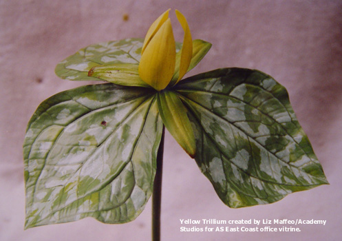 FLOWERING - Yellow Trillium