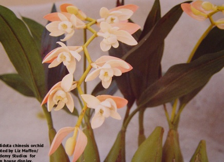 ORCHIDS/ EPIPHYTES/ BROMELIADS -