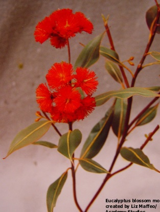 TREE BLOSSOMS /UNDERSTORY - Eucalyptus Blossom