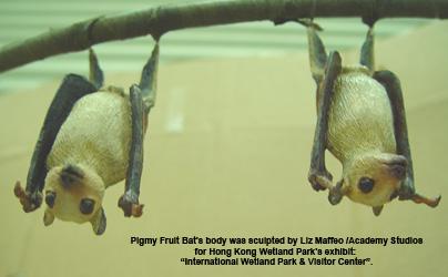 PigmyFruitBat-text2.jpg