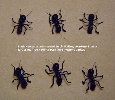 Blackharvestants-text.jpg