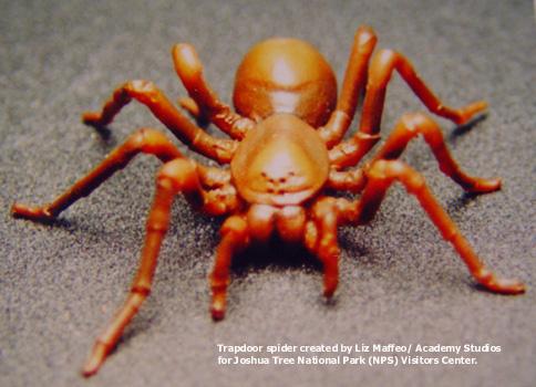 spider_model1-text.jpg