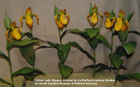 yellowlady_model-tx.jpg