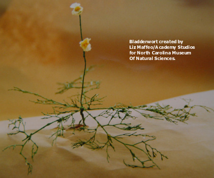 Bladderwort_model-text.jpg