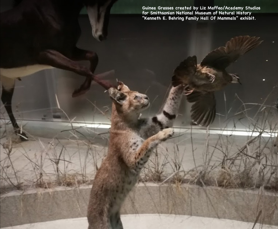 SmithsonianGrass_2.jpg