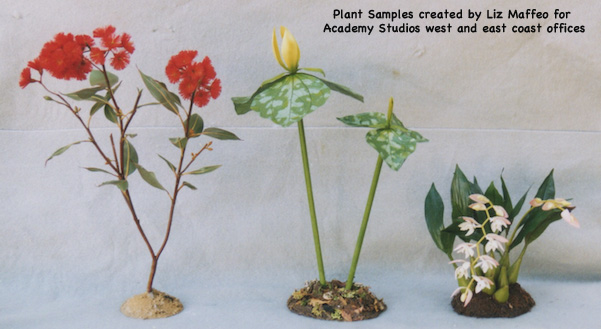 Plant model samples of Eucalyptus sp., Yellow Truilium, and Pholidota Chinesis created for Academy Studios West and East coast offices.