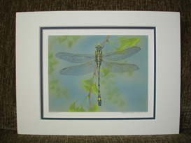 "Small double matte print of Akitsushima (Isle Of The Dragonfly) ""Dragonhunter""."