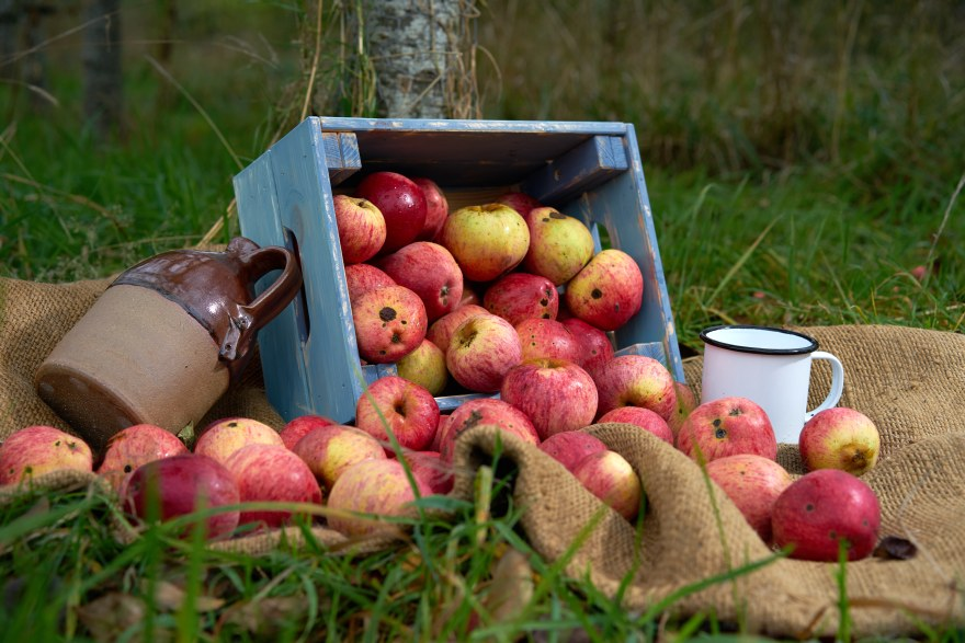 orcharddsc08760.jpg