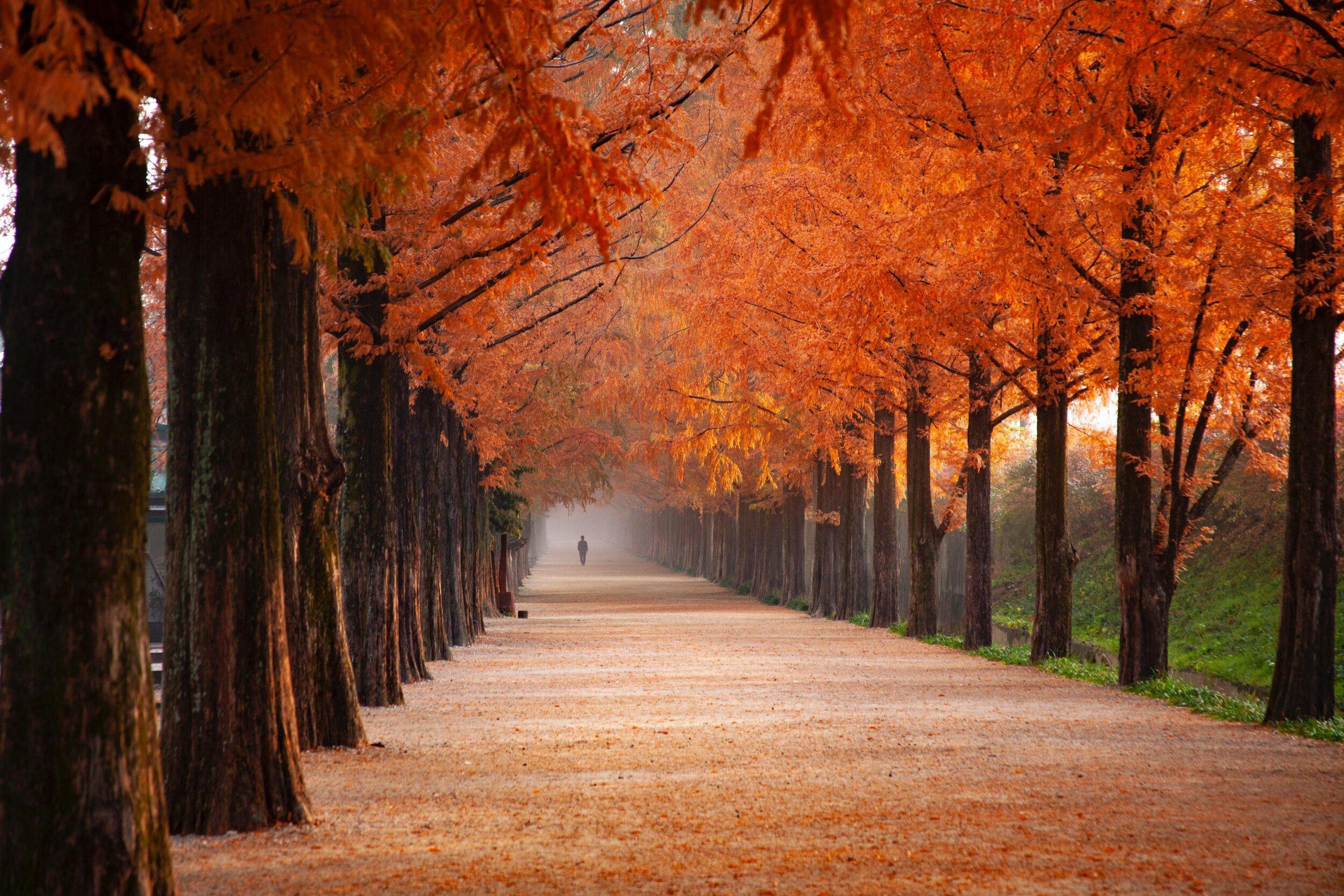 fall time trees.jpg