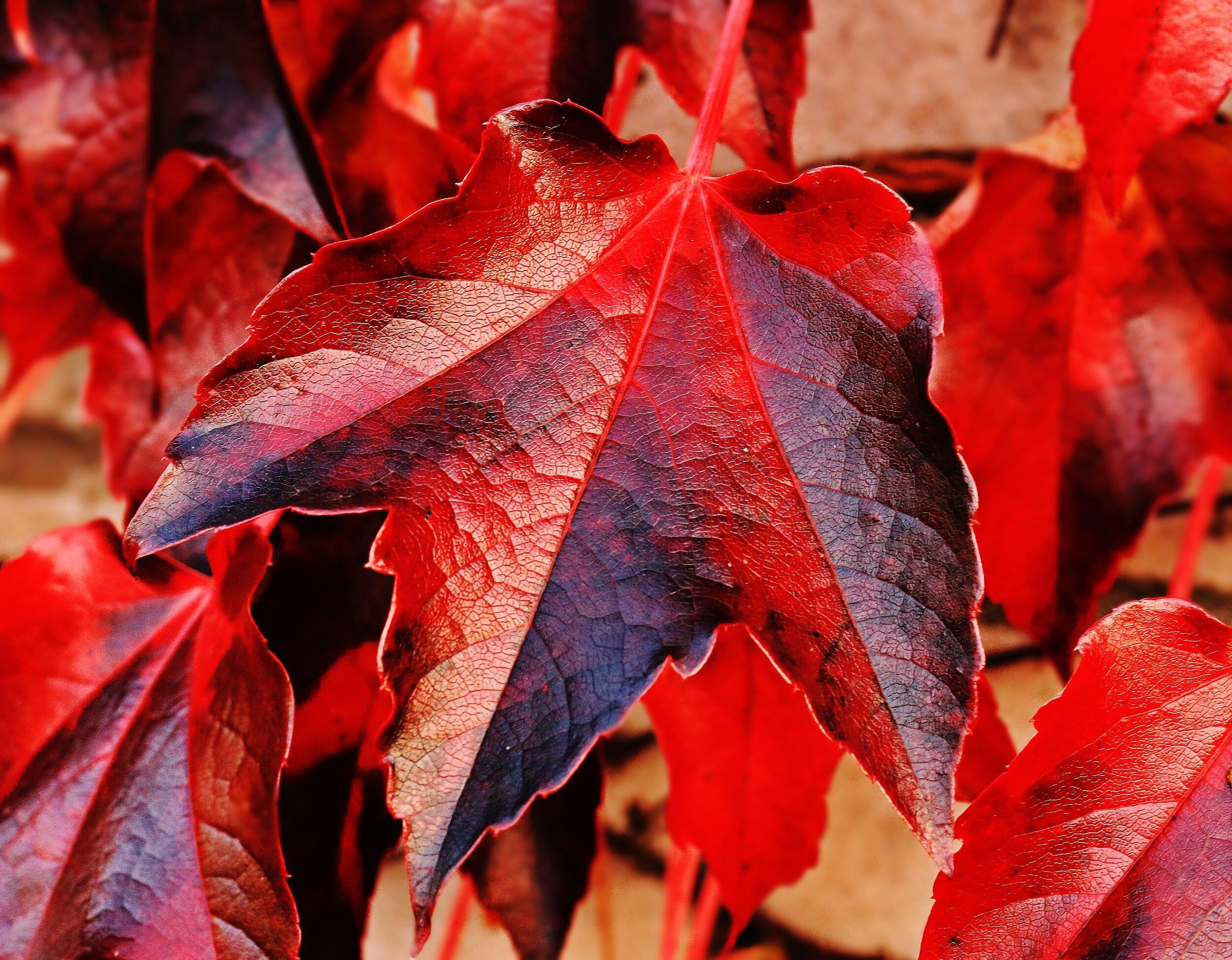 leaves in fall.jpg