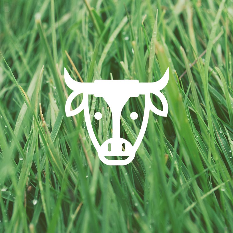 Nomad Branding Cow Icon