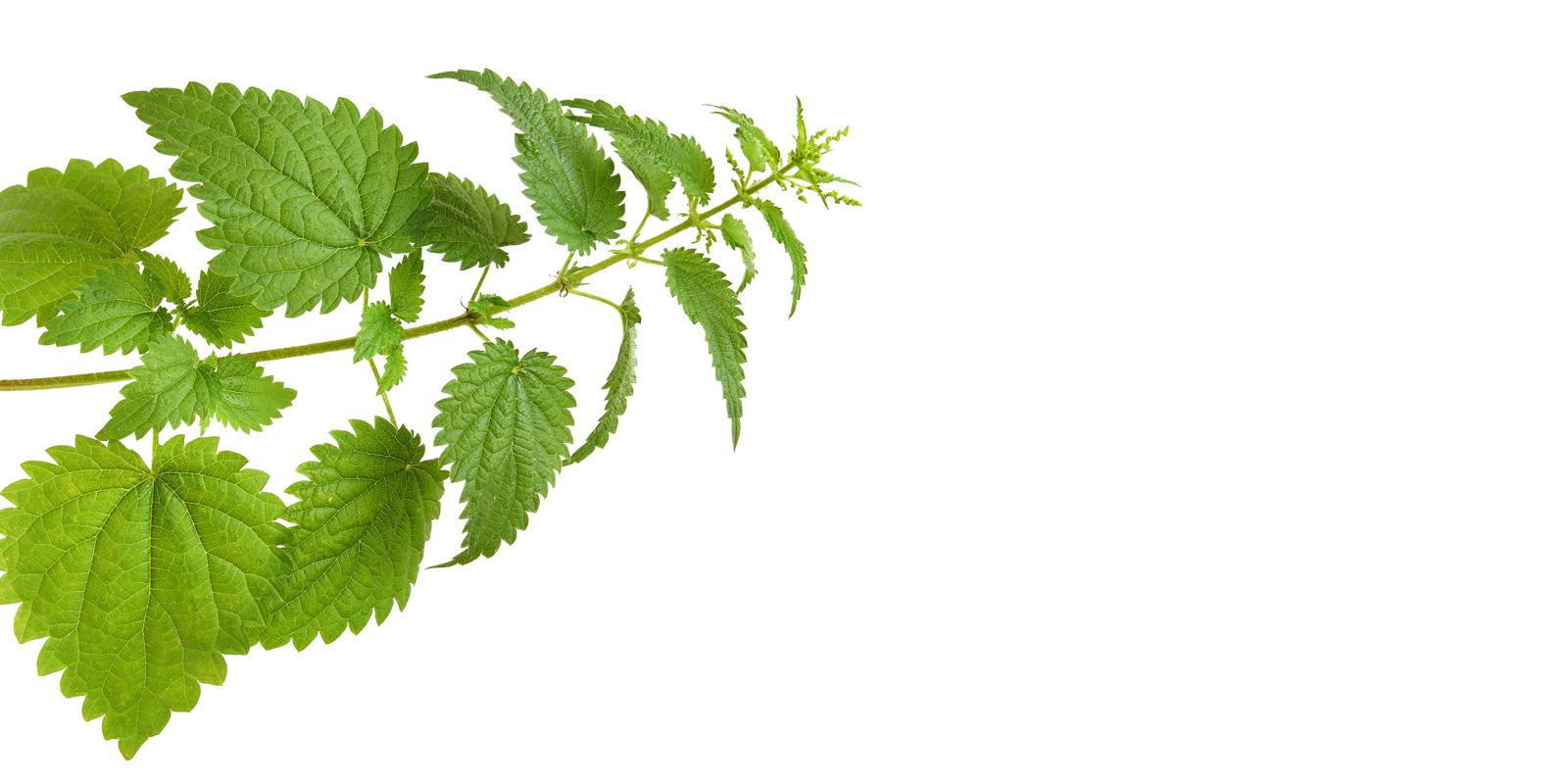 leaves-white.jpg
