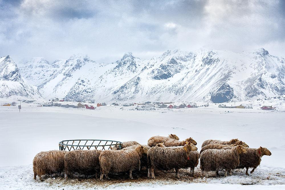 2011-Lofoten-Winter-10.jpg