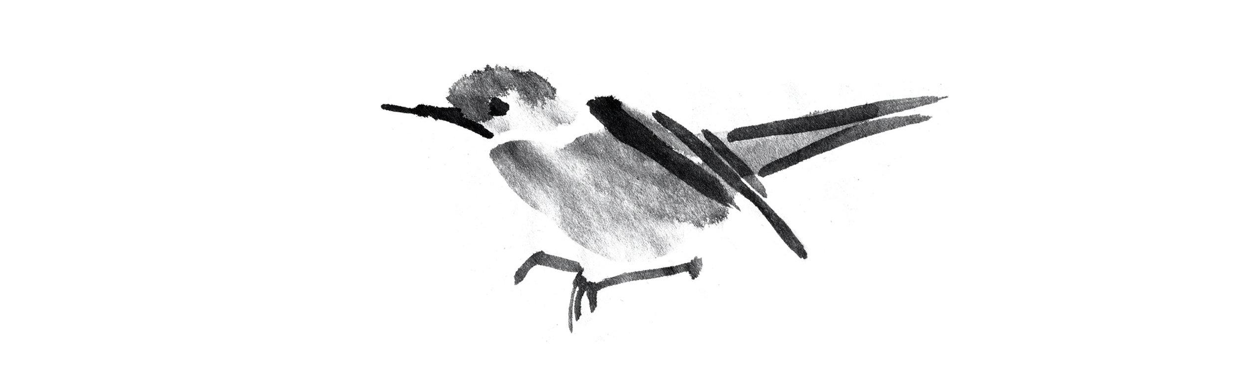 birds breaker.jpg