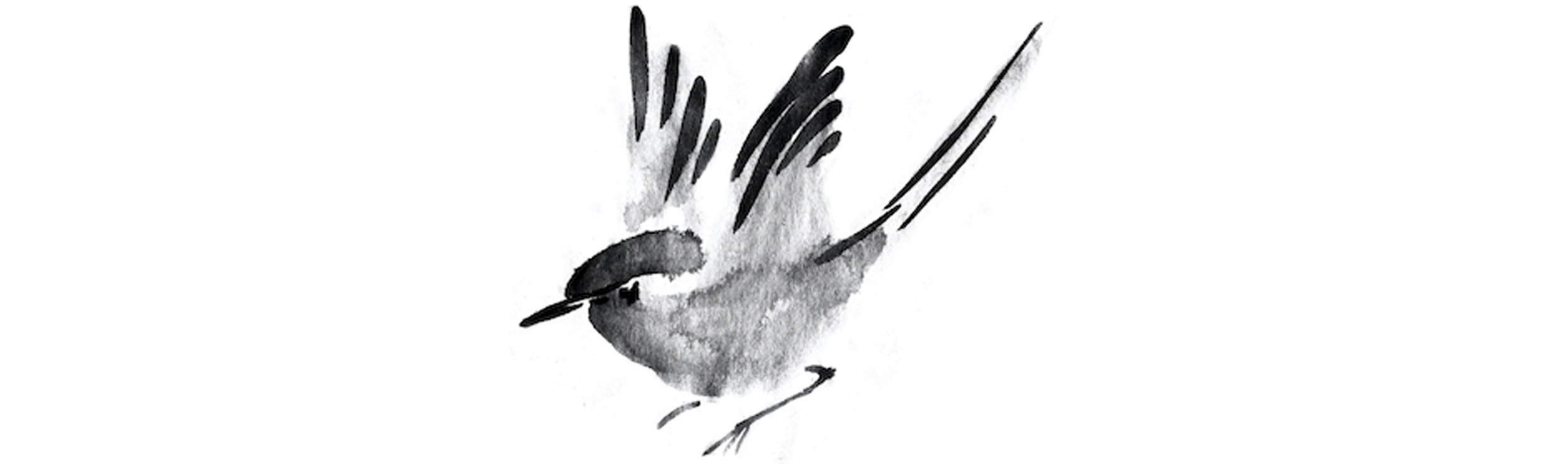 birds breaker2.jpg