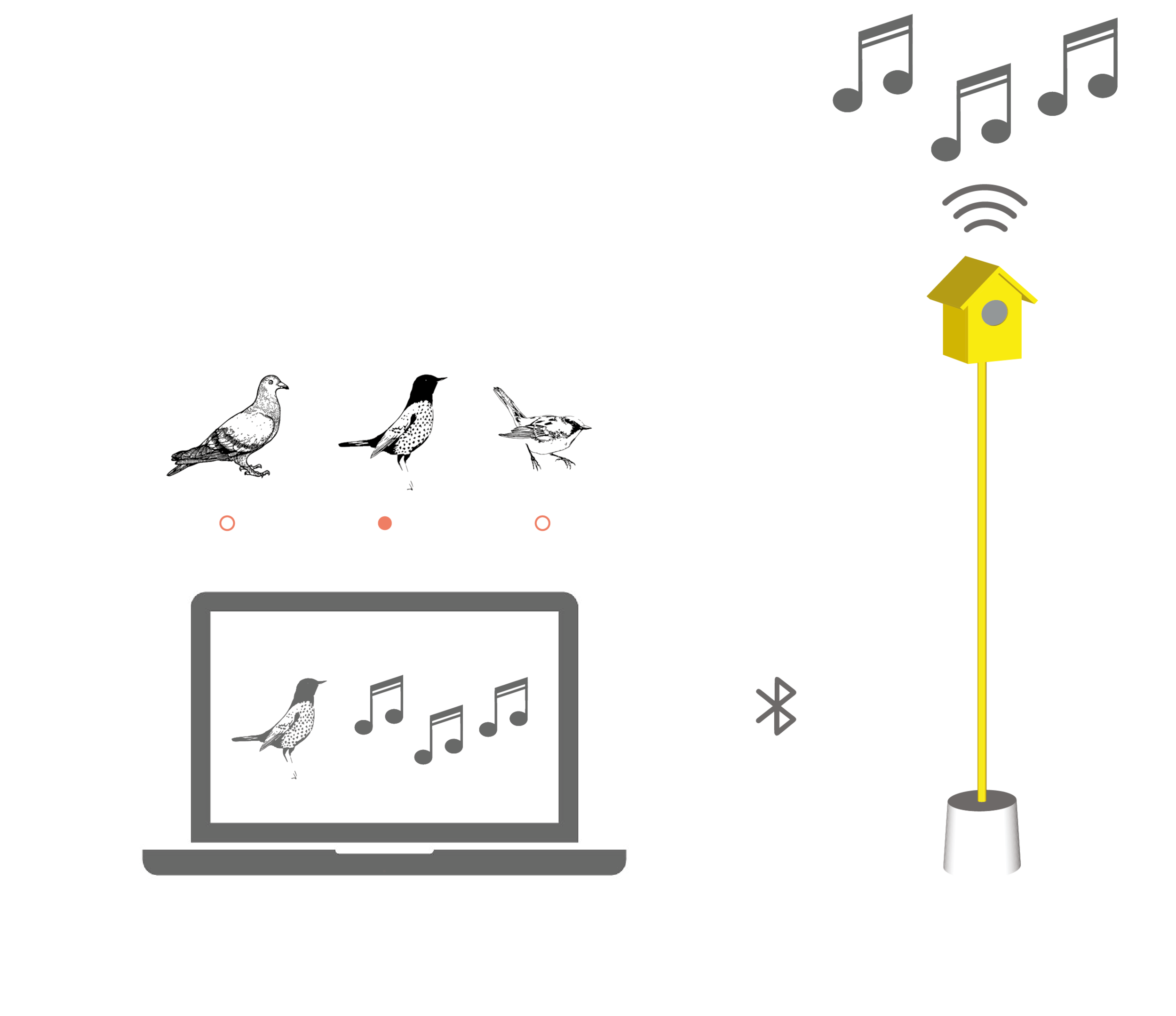 Hearing Birdsong Website Animations-02.png