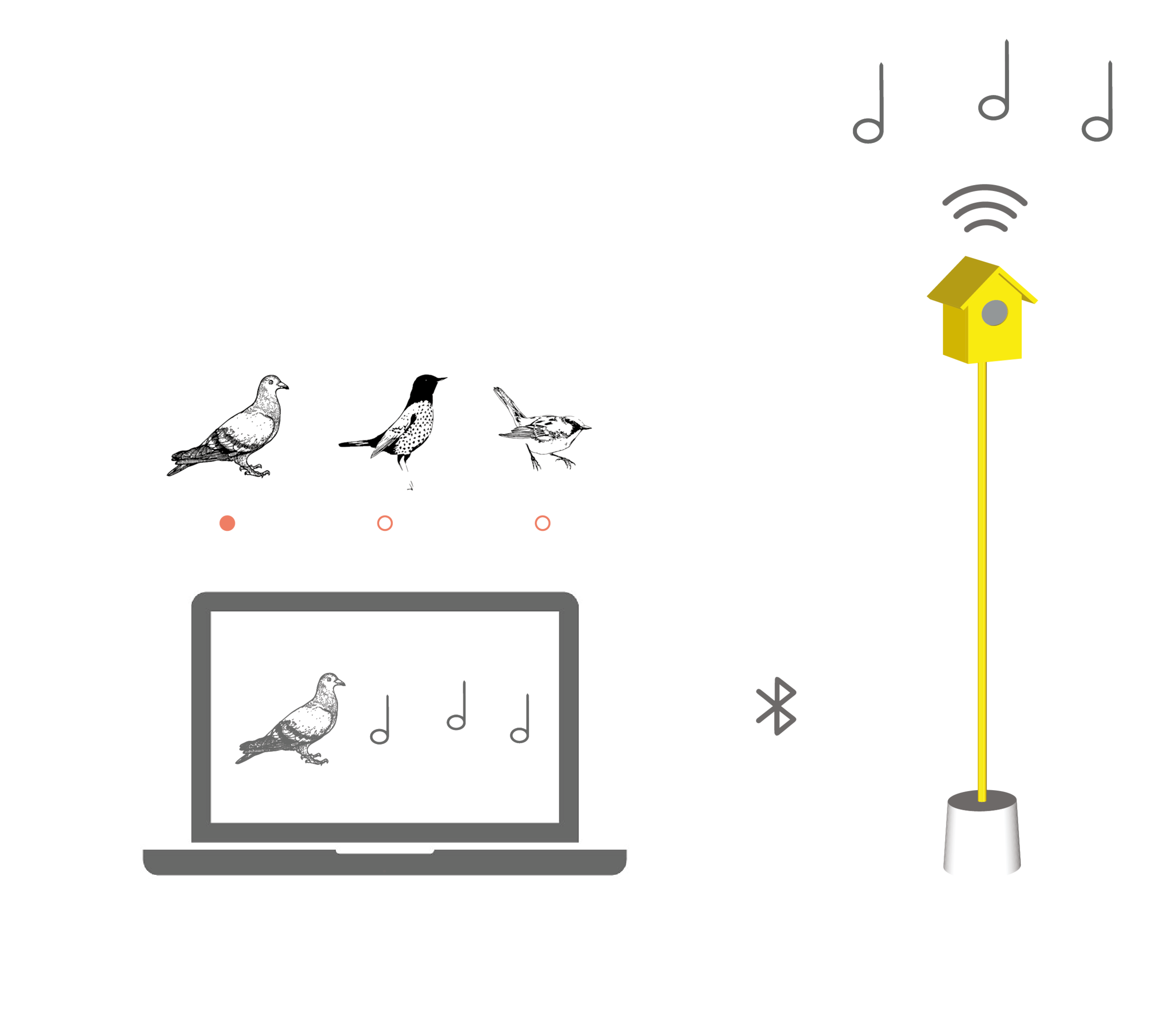 Hearing Birdsong Website Animations-18.png